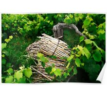 Grape vines Poster