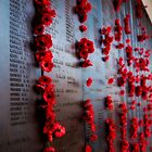 Canberra War Memorial Poppys by Jaxybelle