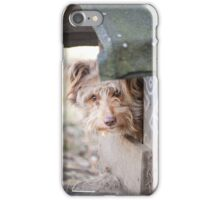 bad dog head jut out of kennel  iPhone Case/Skin
