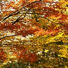 Maple tree foliage in Autumn by Gaspar Avila