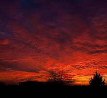 red sunset and trees silhouette in Warsaw  by Arletta Cwalina
