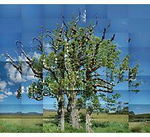 Old Ash, Summer, Argyll Photographic Print