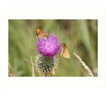 Two Small Skippers Art Print