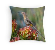 Nectar Feeder Throw Pillow