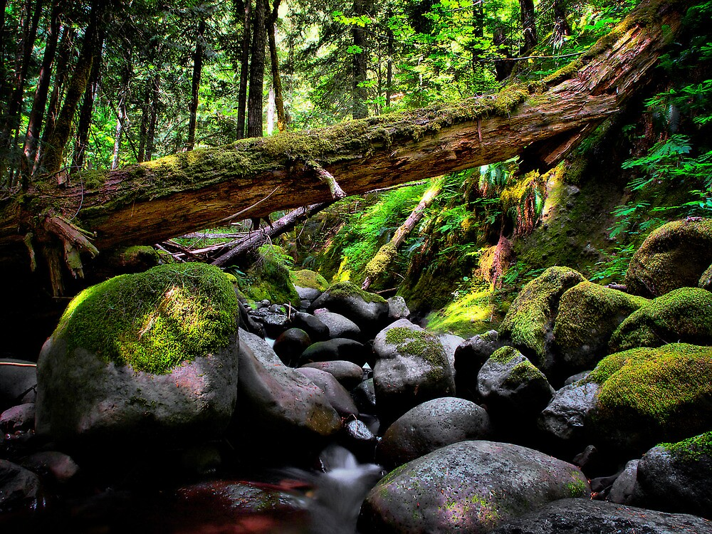 In The Shadows ~ Oregon Cascades ~ by Charles & Patricia   Harkins ~ Picture Oregon