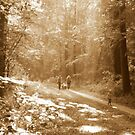 Sunday stroll in the Autumn Forest by ienemien