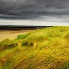 Sea Grass by MickHay