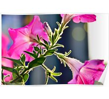 Backlit Flowers Poster