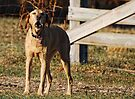 O Sole Mio ~ Sung by The Opera Dog by barnsis