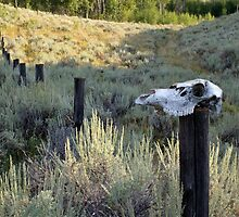 Trail Marker, Wyoming Style by A.M. Ruttle