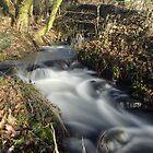 Stream flowing through autumnal woodland by John Butterfield