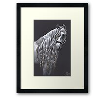 Andalusier - Andalusian Horse Framed Print