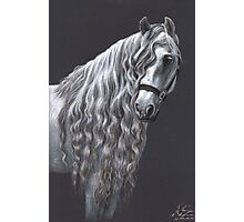 Andalusier - Andalusian Horse Photographic Print