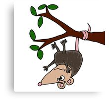 Hilarious Possum Hanging from Tree Canvas Print