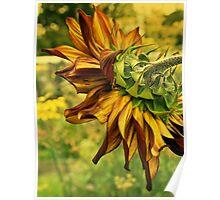 Morning Sunflower Poster