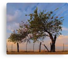 Western Sunrise - Sherman, Texas, USA Canvas Print