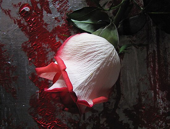Red Tipped Rosebud by Mistyarts