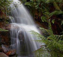 Ferntree Falls by Dean Gerrard
