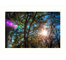 The Light in the Trees Art Print
