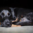 Sweet Dreams by Ticker