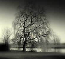 Weeping Willow by Kate Towers IPA