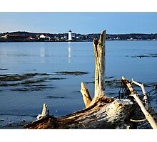 Drift Wood Blue Photographic Print