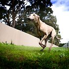 Greyhound Racing by d4dogphoto