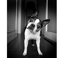 Bailey Head Slant Photographic Print