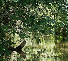 Reflections In Green - Shades of Green Series by jules572