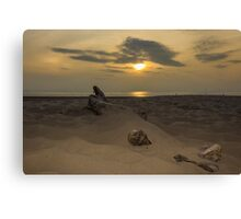 Driftwood in the sand Canvas Print