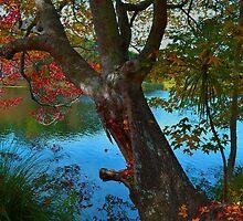 An Autumn Day by Linda Cutche