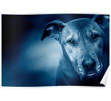 Nash Blue Poster