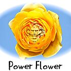 Power Flower by who-doo