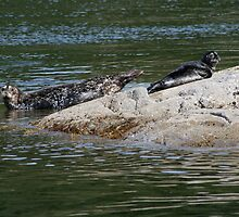 Seals: Mother and Pup by Keanna