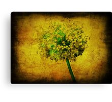 Allium. Canvas Print
