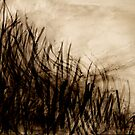 through the long grass...... down to the valley by banrai