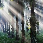 Morning Light by Steven  Siow