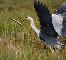 Stop Playing With Your Food! by Mark Hughes