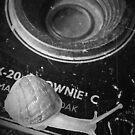 Brownie Snail by RodMC