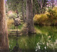 Campbell Creek,Dysart Queensland, Australia by Cliff Vestergaard