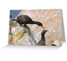 Checking on the chicks, Cormorant, Saltee Islands, County Wexford, Ireland Greeting Card