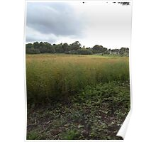 Countryside: Kingswood, Surrey -(260811a)- digital photo Poster