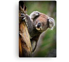 How Much Can A Koala Bear! Canvas Print