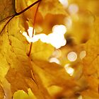 Yellow Leaves  by Barnewitz