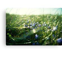 Tall Grass & BlueBells Canvas Print