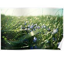 Tall Grass & BlueBells Poster