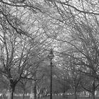 Green Park  by Anitajuli