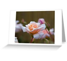 Rose 12 Greeting Card