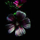 Tiny Lilac Fractal Lovers by Atılım GÜLŞEN