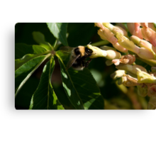Bumble Bee 3 Canvas Print
